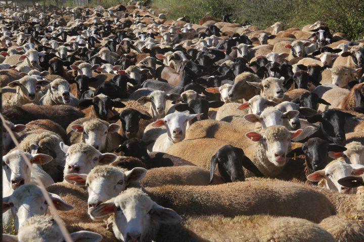 Fazenda Ercoara – um dia diferente no entorno de Brasília