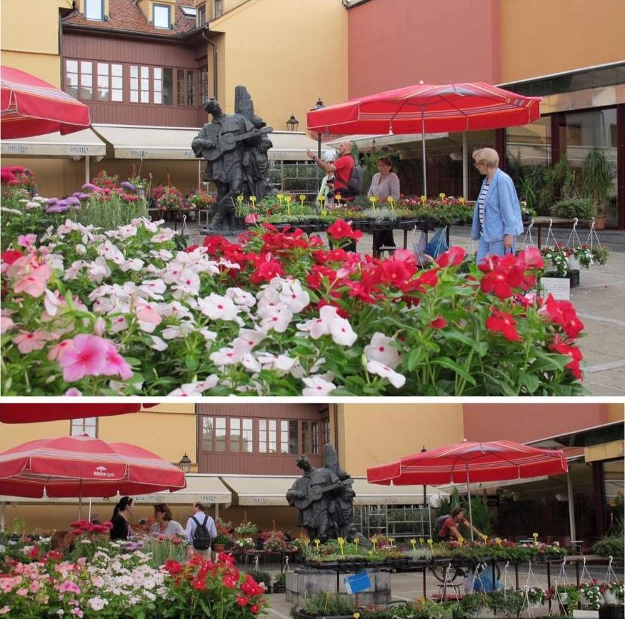 o que fazer em Zagreb Mercado Dolac Feira de Flores