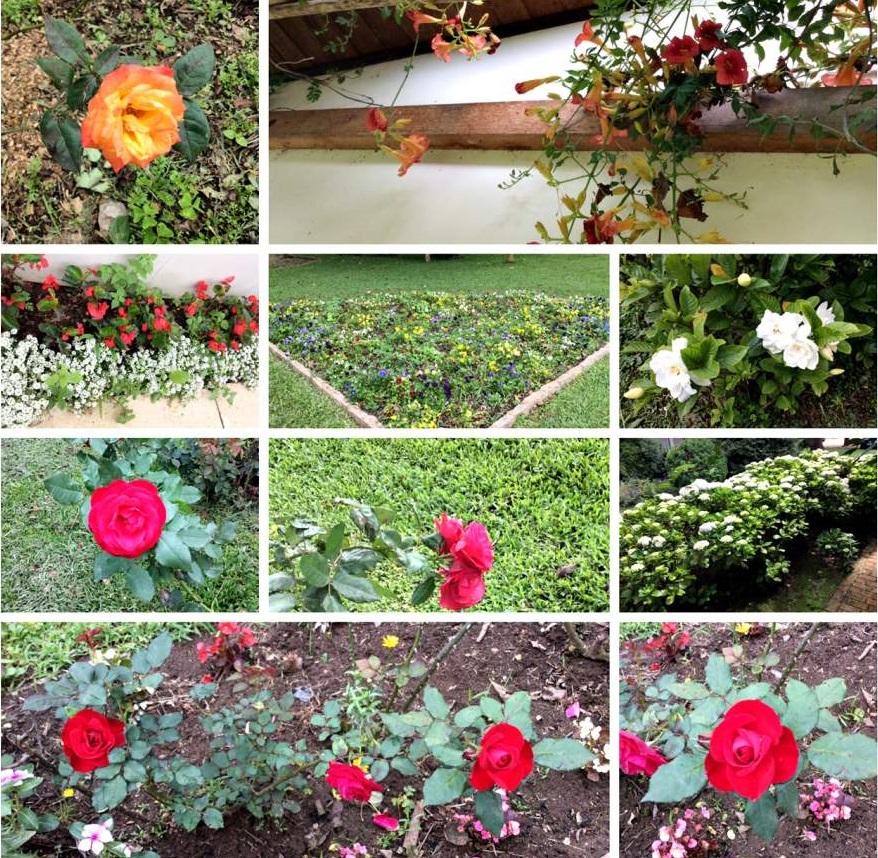 Witmarsum a Alemanha no Paraná Flores