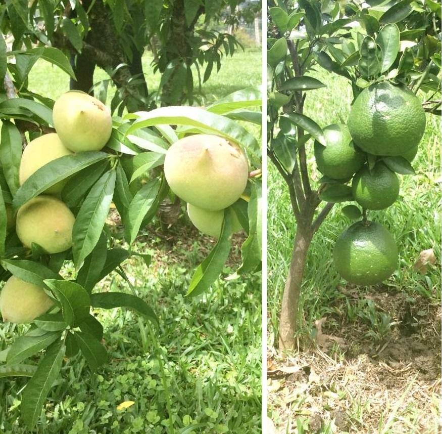 Witmarsum a Alemanha no Paraná Frutas
