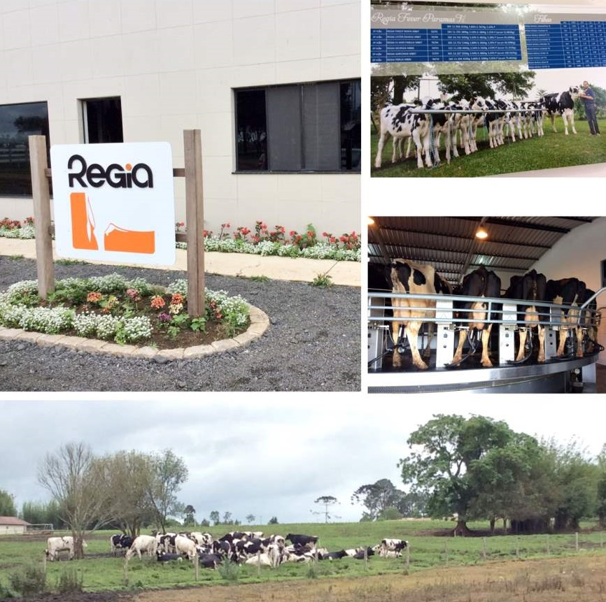 Witmarsum a Alemanha no Paraná Régia Laticinios