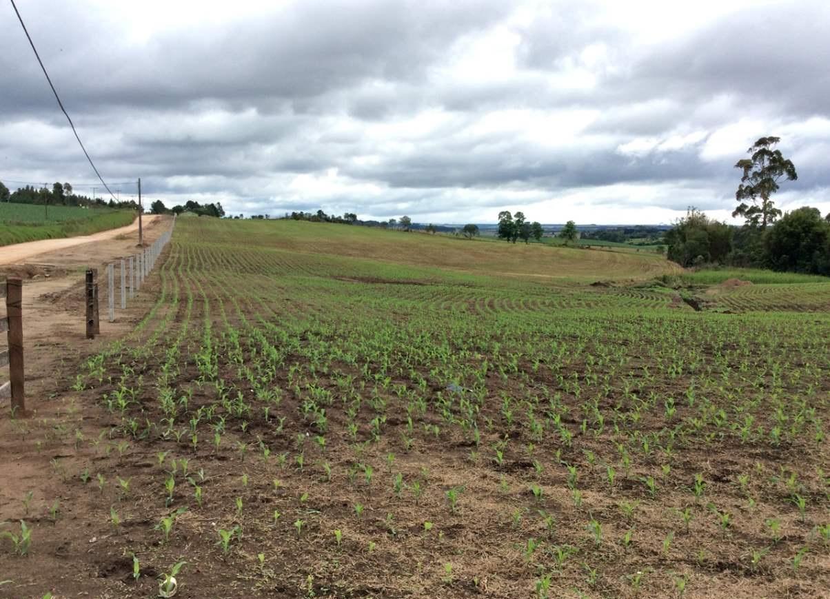 Witmarsum a Alemanha no Paraná Campos de Plantação