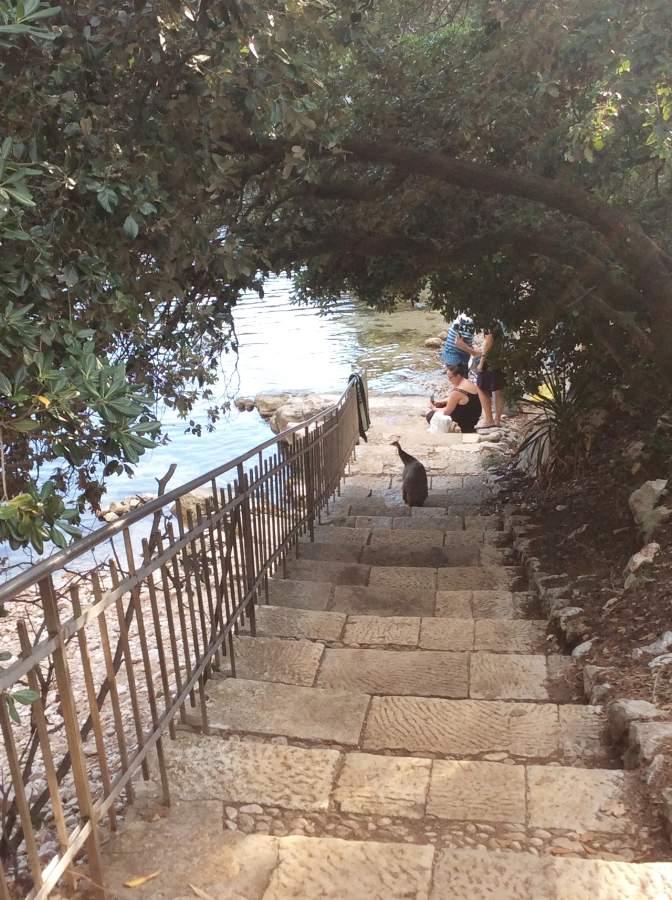 Ilha de Lokrum Escada Mar Morto