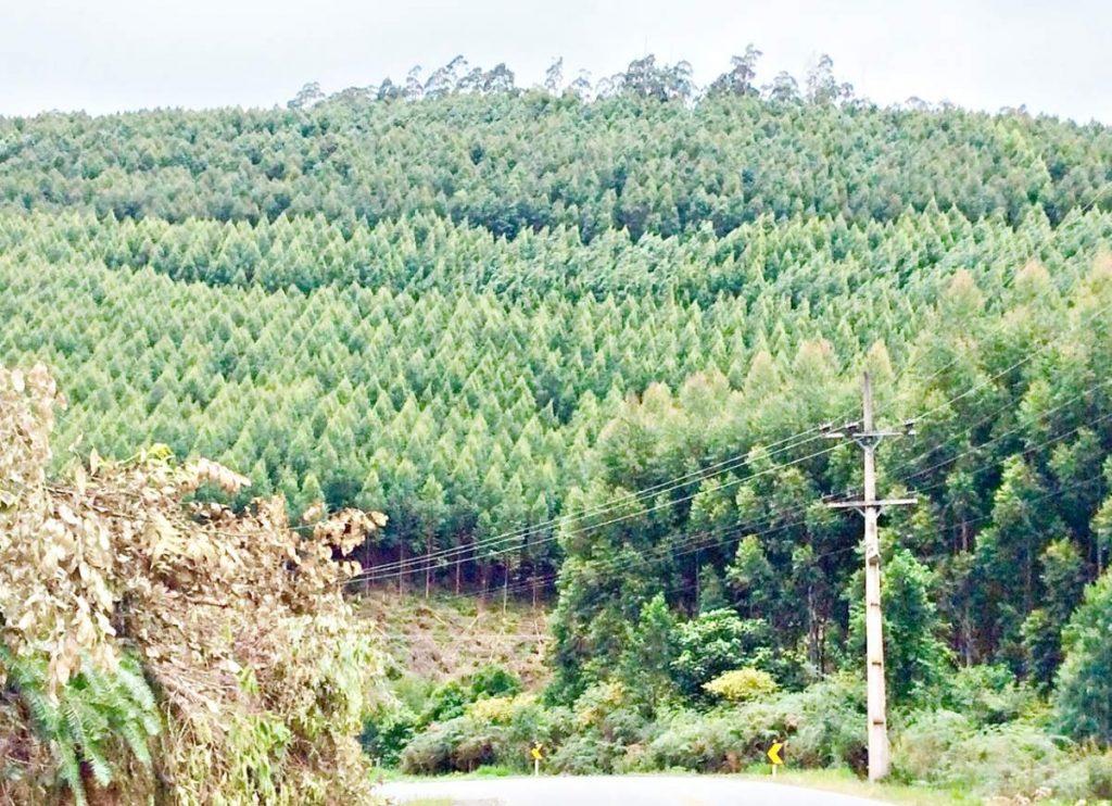 Monte Verde Plantacao