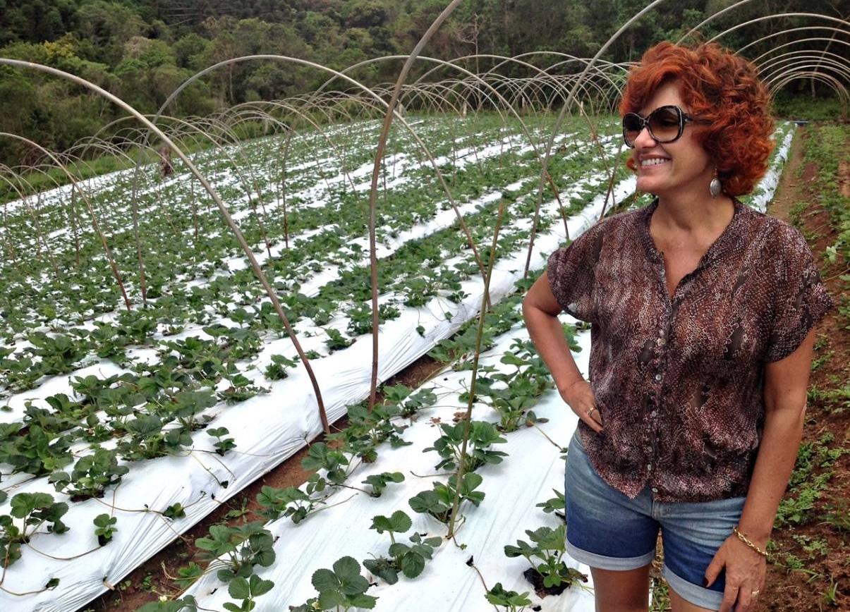Gonçalves Plantação de Morangos Orgânicos
