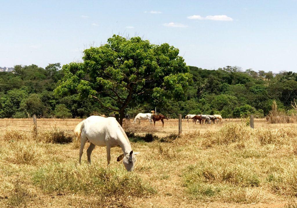 Rancho Canabrava- Cavalos