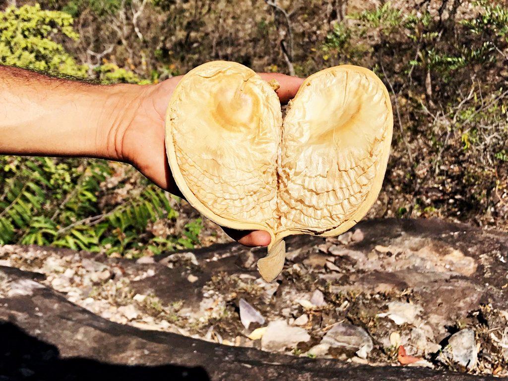 Pedra Chapéu-do Sol - vegetação rupestre