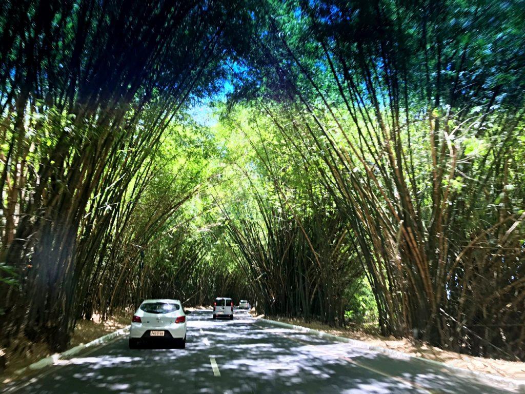 Caminho do Bambu-Aeroporto de Salvador