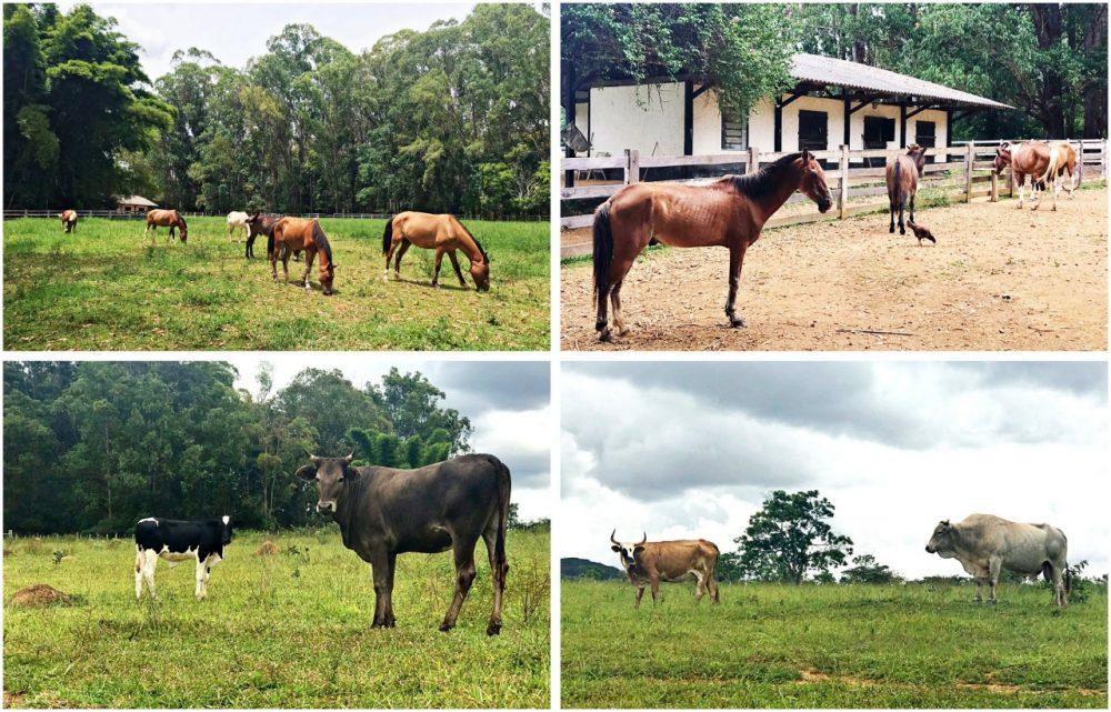 Pousada Fazenda São Bento - animais