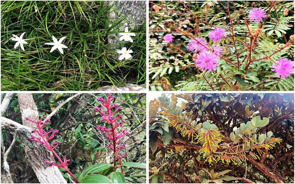 Flores do Cerrado - Pousada Fazenda São Bento