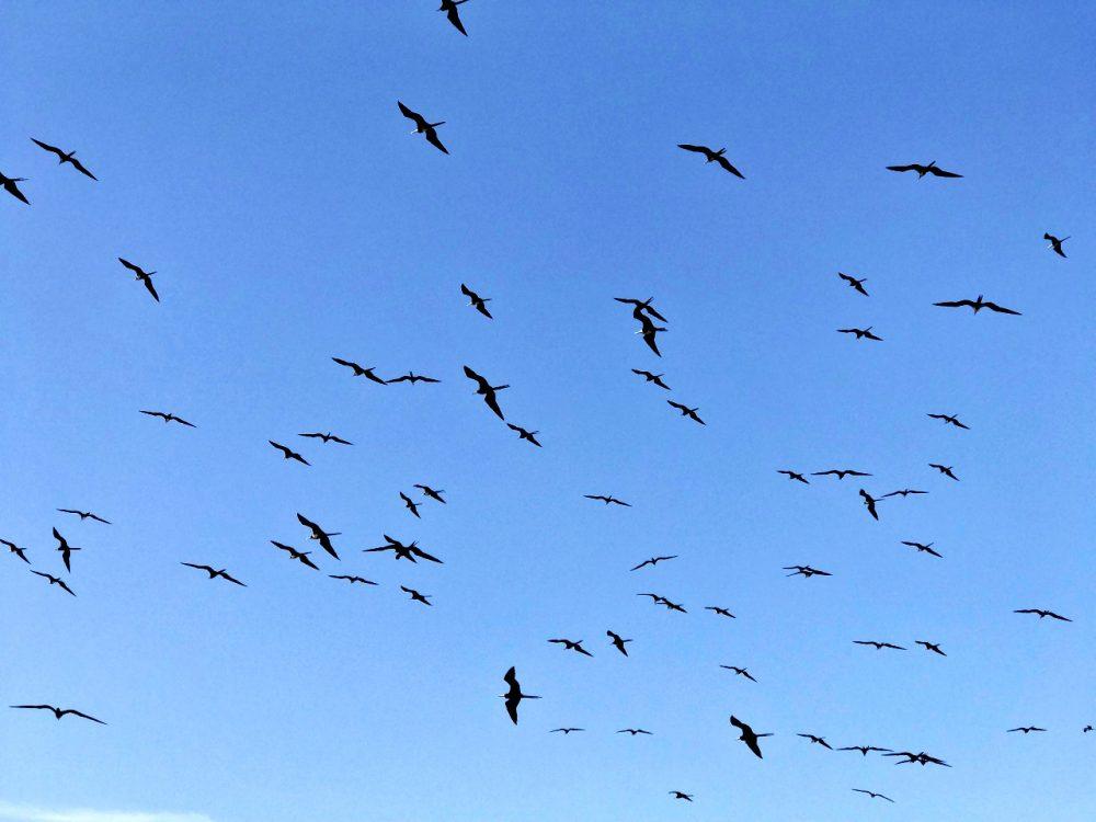 Isla Iguana - aves migratórias sobre a ilha