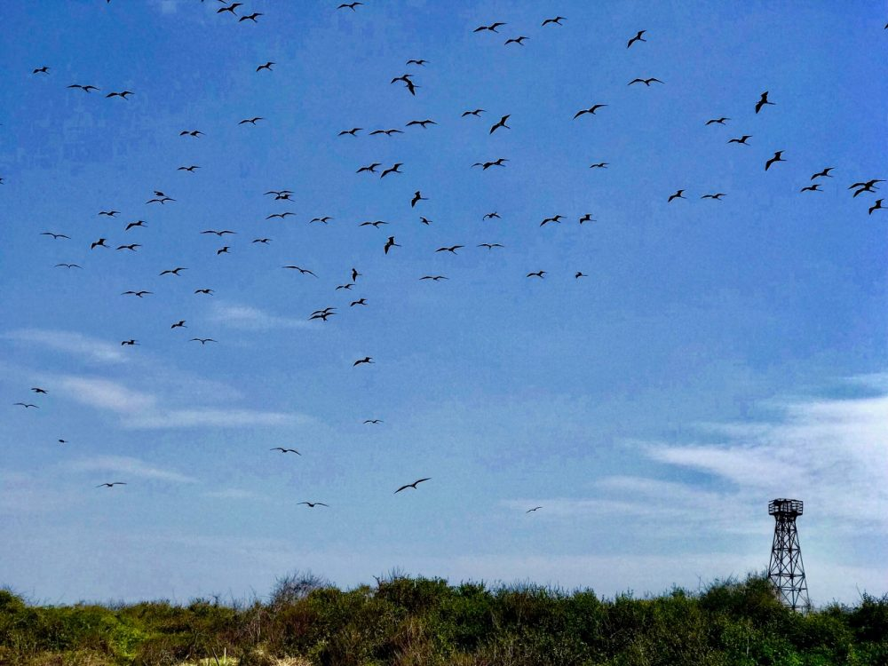 Isla Iguana - El Faro