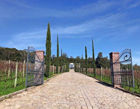 4 vinícolas no Vale dos Vinhedos – Rio Grande do Sul