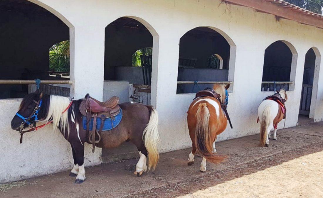 Ponyland - Passeio perto de Curitiba
