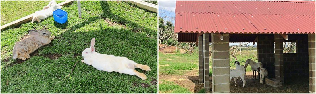 Ponyland e seus animais - Witmarsum