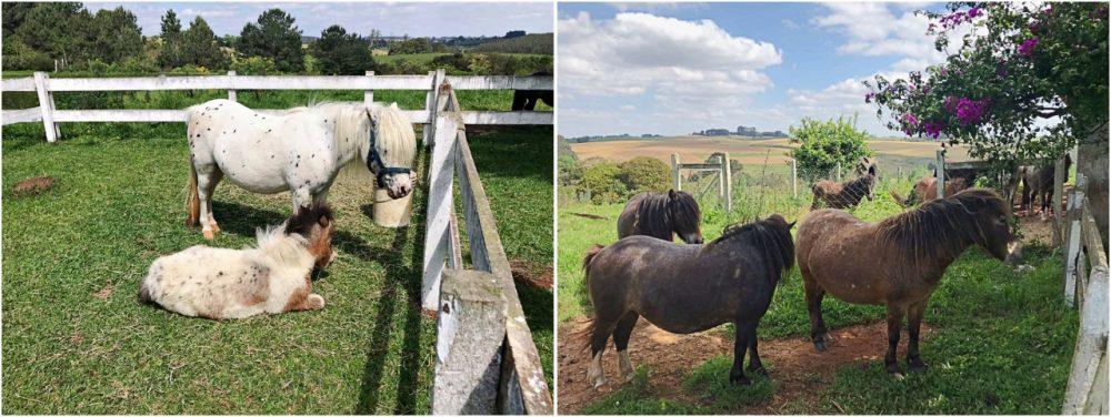 Ponyland- Witmarsum - Poneis