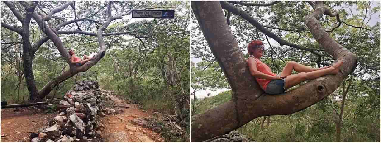 Trilha Poço da Chica - árvore e balanço
