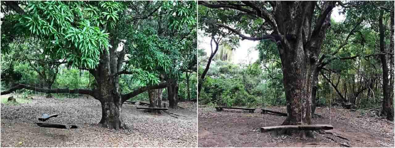 Balanços Parque Zareia