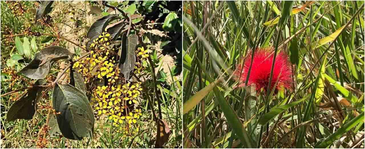 Flores do Serrado-Parque Nacional da Serra do Cipó
