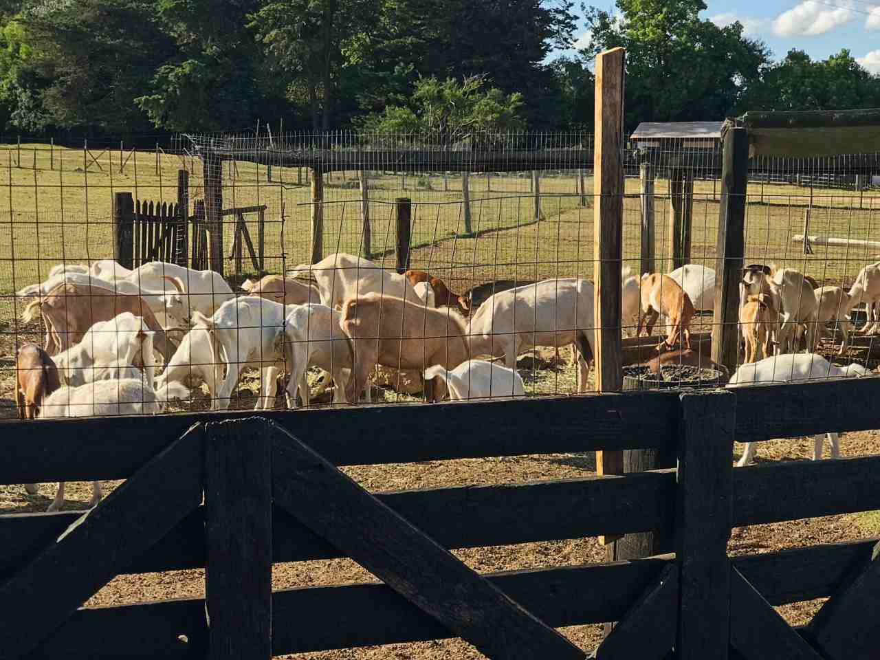 Fazenda La Pitaia animais Uruguai