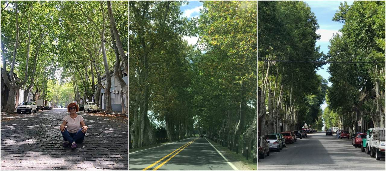 Ruas coberta pelas árvores em Colônia del Sacramento