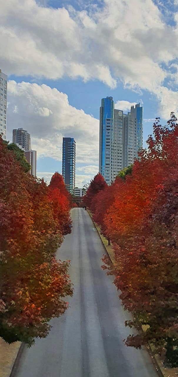 Rua vazia Curitiba