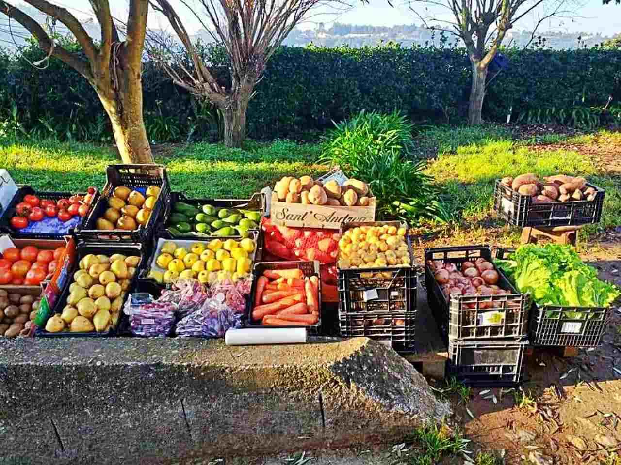 Produção agrícola Familia Alves - Portugal